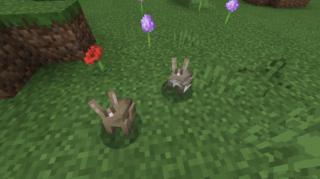 種類の違う茶ウサギさん♪
