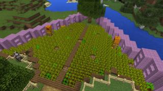 家畜飼料の小麦畑
